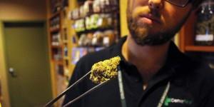 Marijuana business law company