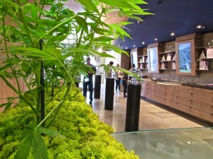 Cannabis business law firm1