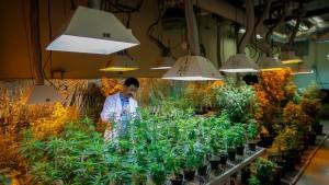 Medical marijuana school1
