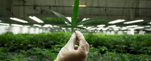 Marijuana business education_3