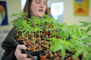 Medical weed seminars1
