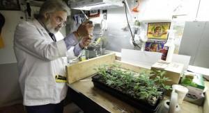 School for marijuana1