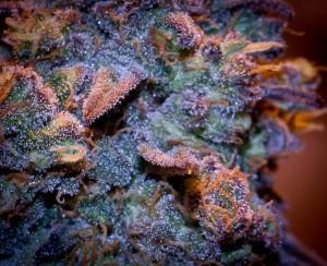 marijuana college online1