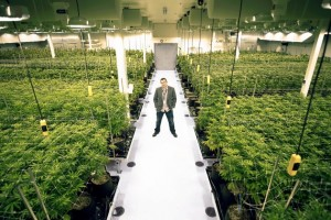 Courses for weed business
