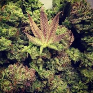 Education for marijuana1