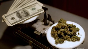 Cannabis dispensary license