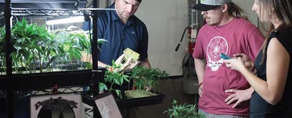 Marijuana Courses