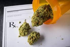 Marijuana insurance company1