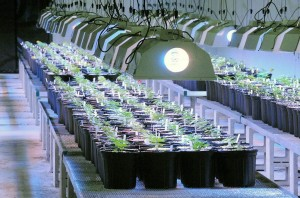 Cannabis cultivation permits2