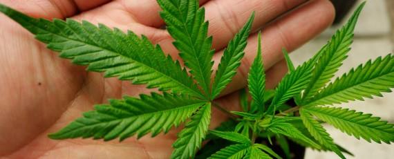 Medical marijuana dispensary applications