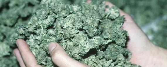 Online marijuana academy