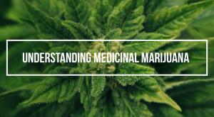Online cannabis education1