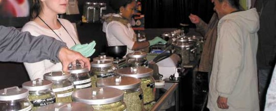 How to obtain a cannabis business license?